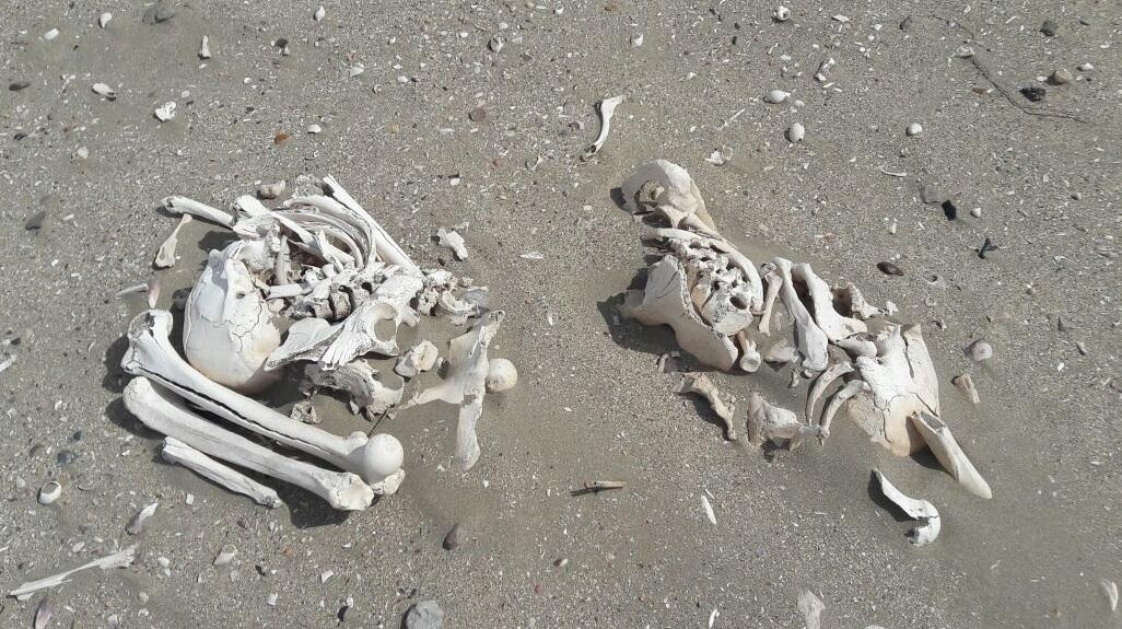 Encontraron 20 esqueletos humanos mientras andaban en cuatriciclo en la playa
