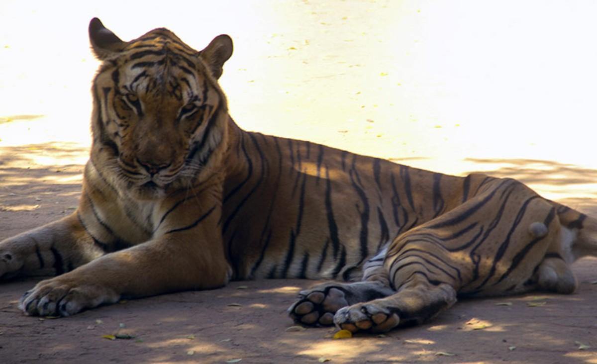 Zoológico aniquila a animales para poder alimentar a otra especies