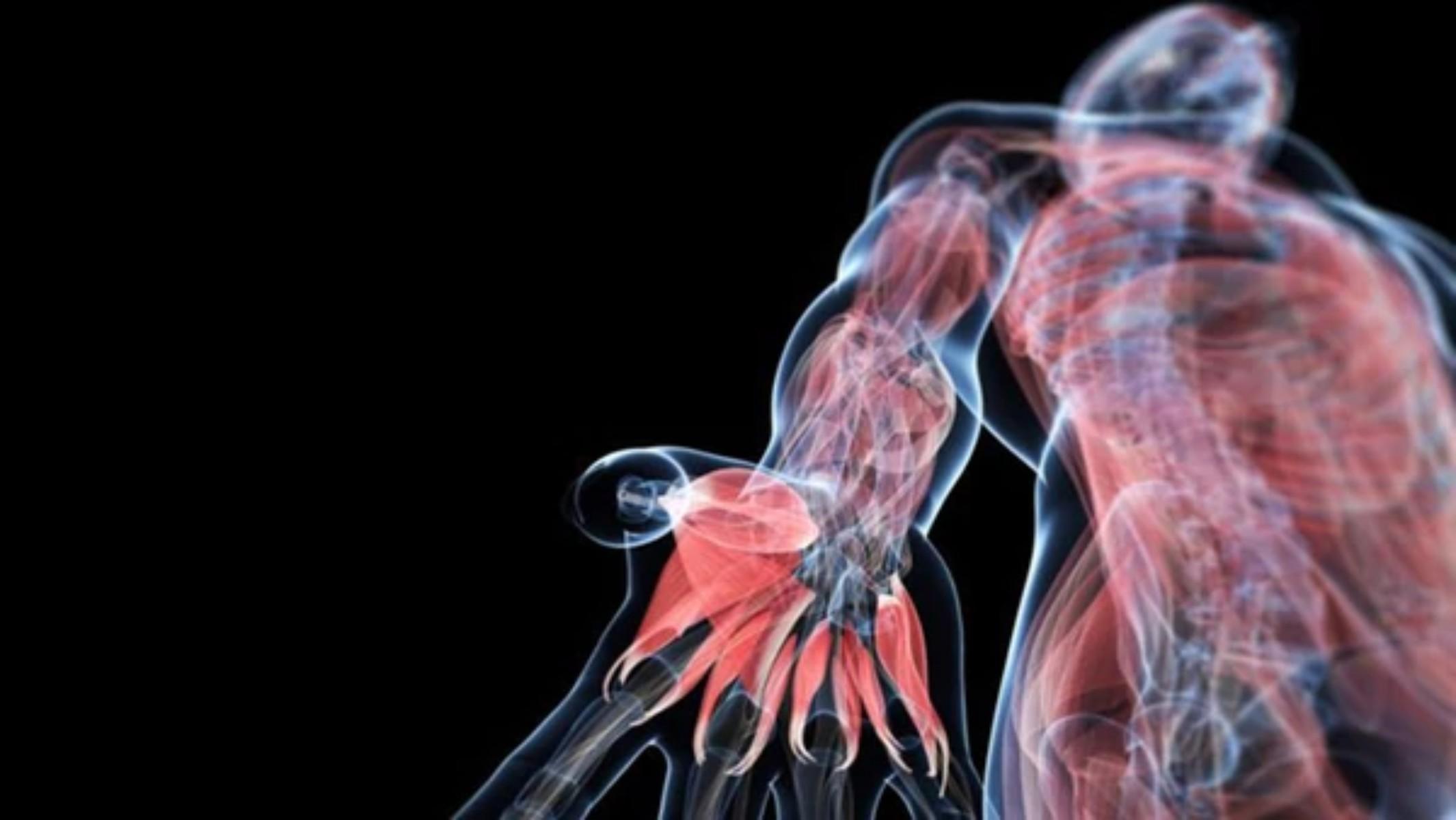 Magnífico Lado Grises Carrete Anatomía Fotos - Anatomía de Las ...